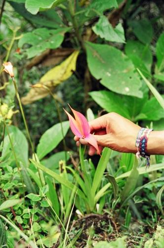 Winay Wayna orchid
